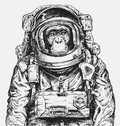 Hand Drawn Monkey Astronaut Vector Royalty Free Stock Photo