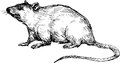 Hand drawn mouse Royalty Free Stock Photo