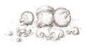 Hand drawn mushrooms illustration of Stock Images