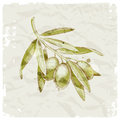 Hand drawn olive branch Stock Photo