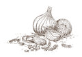 Hand drawn onion illustration of bulbs and slices Royalty Free Stock Images
