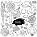Hand drawn onion set Royalty Free Stock Photo