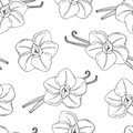 Hand drawn outline seamless pattern with vanilla. Black and white food background