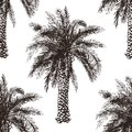 Hand drawn palm tree seamless