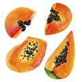 Hand drawn papaya watercolor. Tropic fruit watercolor painting. Papaya slice isolated on white background. Fresh health