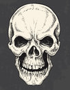 Hand drawn pen and ink skull vector Royalty Free Stock Photo