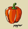 Hand drawn pepper fresh color on beige Stock Image
