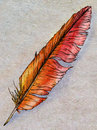 Hand drawn phoenix feather ink sketch of a fantasy birds colored with red and yellow watercolors Stock Image