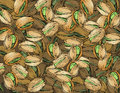 Hand drawn pistachios texture made of Royalty Free Stock Images
