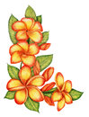 Hand drawn plumeria corner gentle with flowers Stock Photo