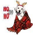 Hand drawn portrait of beagle dog wearing deer horn hat and plaid blanket. Vector Christmas poster. Xmas greeting card Royalty Free Stock Photo