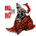 Hand drawn portrait of french bulldog dog wearing santa hat and plaid blanket. Vector Christmas poster. Xmas greeting Royalty Free Stock Photo