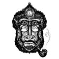 Hand-drawn portrait of funny monkey with glasses. Smart mandrill and smoking pipe. Sketch vector illustration Royalty Free Stock Photo