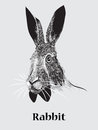 Hand drawn rabbit portrait Royalty Free Stock Photo