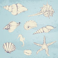 Hand drawn seashells illustration of Stock Photography