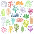 Hand drawn seaweed, coral set . Sea plant icons
