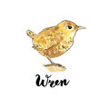 Hand drawn set of watercolor isolated bird wren on white backgr