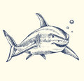 Hand drawn shark Royalty Free Stock Photo