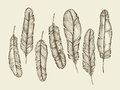 Hand drawn sketch feathers, plumage, fluff. vintage writing feather. Vector illustration