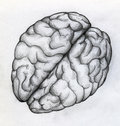 Hand drawn sketch of human brain Royalty Free Stock Photo