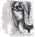 Hand drawn sketch of a lion looking intently at the camera Royalty Free Stock Image