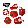 Hand drawn sketch style bell pepper set isolated on white background. Ripe and sliced red peppers.