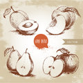 Hand drawn sketch style fruits set. Apricots, peaches, half pears, apples. Eco food vector illustration