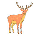 Hand Drawn Spotted Reindeer. Cute Deer on White. Flat Style.
