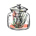 Hand drawn vector abstract illustration with succulent plant in glass jar in pastel color isolated on white background
