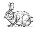 Hand drawn vector rabbit in engraving style Royalty Free Stock Photo