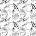 Hand drawn vector seamless pattern. Collections of Lemons. Royalty Free Stock Photo