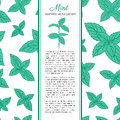 Hand drawn vector seamless patterns with mint leaves, peppermint, spicy herbs, kitchen texture, Doodle cooking