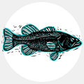 Hand drawn vector simple fish , seafood graphic element. Royalty Free Stock Photo