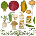 Hand drawn vegetable set 4 Stock Images