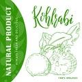 Hand drawn vegetarian illustration. Isotaled kohlrabi element. Vector sketch for card or poster.