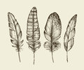 Hand drawn vintage bird feathers. Sketch writing feather. Vector illustration Royalty Free Stock Photo