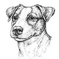 Hand drawn vintage style sketch of cute funny Jack Russell Terrier Dog. Vector Illustration