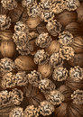 Hand drawn walnuts texture made of walnut Royalty Free Stock Image