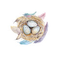 Hand drawn watercolor art bird nest with eggs , easter design. Royalty Free Stock Photo