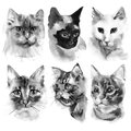 Hand drawn watercolor black cats portraits collection