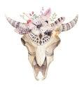 Hand drawn  Watercolor bohemian cow skull.  Western mammals. Royalty Free Stock Photo