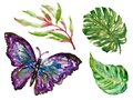 Hand drawn watercolor Butterfly Colorful tropical plants set exotic leaves watercolor illustration