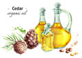 Hand drawn watercolor composition with bottles of Cedar oil and nuts