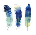 Hand Drawn Watercolor Feather ...