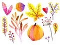 Hand drawn watercolor forest leaves and berries. Isolated icons. Autumn abstract botanical branches. Guelder, pumpkin