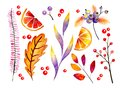Hand drawn watercolor forest leaves and berries. Isolated icons. Autumn abstract botanical branches. Guelder, pumpkin Royalty Free Stock Photo