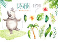 Hand drawn watercolor hippopotamus animals. Boho nursery yoga practice hippo illustrations, jungle tree, brazil trendy