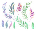 Hand drawn watercolor illustration. Spring leaves and branches.