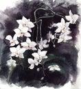 Watercolor illustration white orhid phalaenopsis on black background