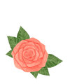 Hand drawn watercolor pink rose with leaves isolated on the whit
